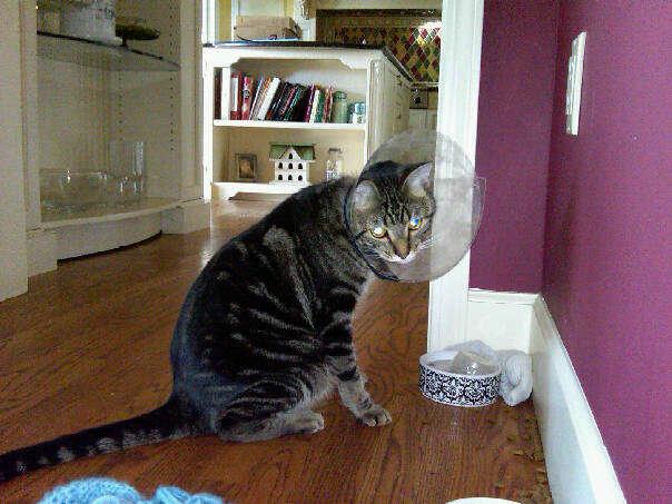 Linus Kitten Cone